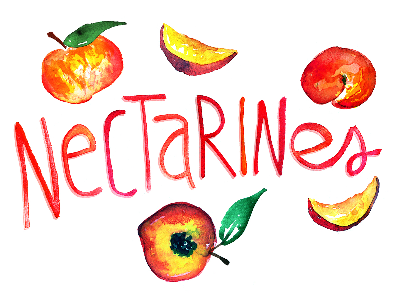 nectarines watercolor illustration