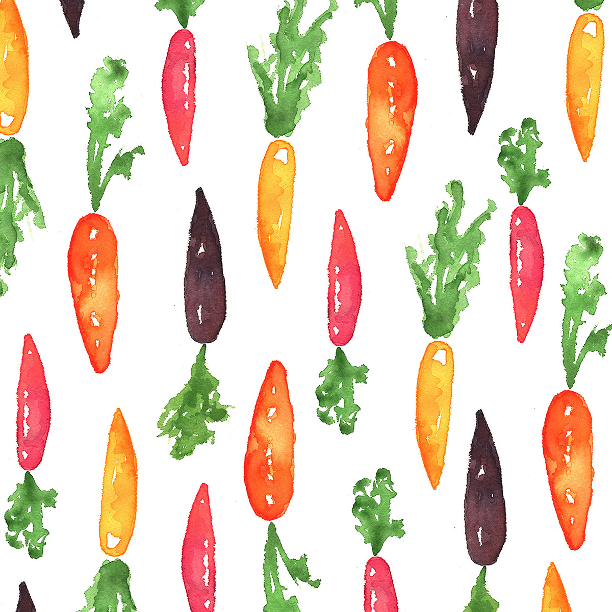 root vegetable food illustration